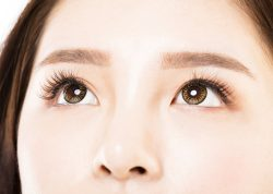 brows of a KPop Star